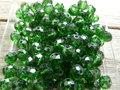 Glas-kristal-rondel-facet-met-mooie-glans-geverfd-8x6mm-groen
